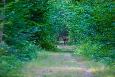Une belle rencontre dans la forêt d'Anet (mais il a fallu se lever de très bonne heure !)