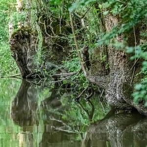 Dans le marais Poitevin