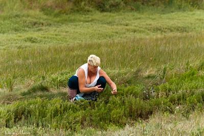 Cueilleuse de salicornes, Baie de Somme (2011)