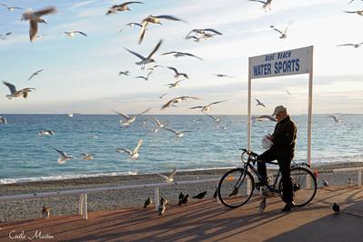 Déjeuner des oiseaux, Promenade des Anglais, Nice (2009)