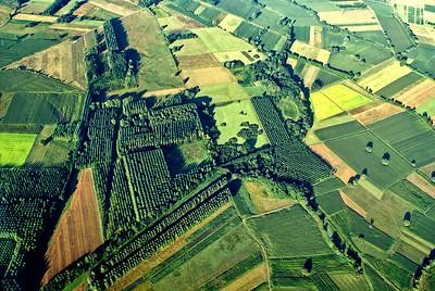 Verdure et champs