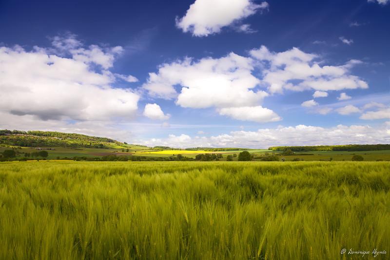 Océan de blé