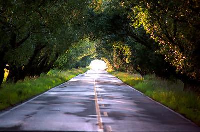 Le chemin des Prêtres - Abitibi le 01 juillet 2006 .