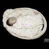 Payton1wk 016 e bws