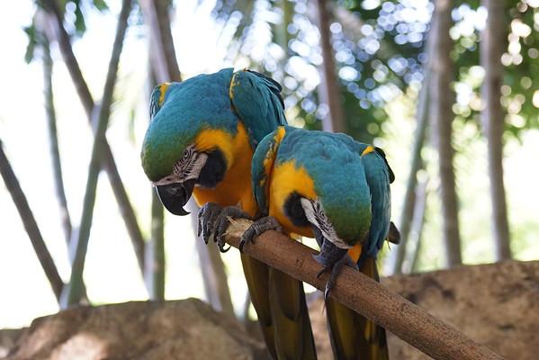 Pb zoo 62715