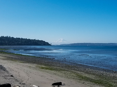 summer morning run in discovery park - looking southeast