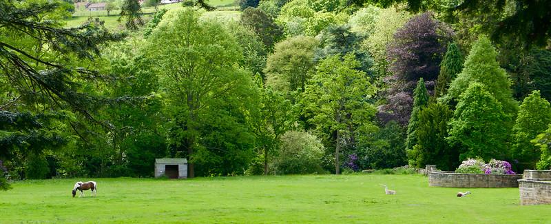 V Egton Bridge je aj Egton Manor - v záhrade kôň a lamy