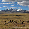 Sheep graze in the shadow of the Andes.
