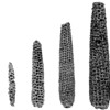 """Corn cobs, Zea mays; plant remains; Tehuacan Valley, Puebla, Mexico; c. 5000 BC to AD 1500<br /> Richard """"Scotty"""" MacNeish's sequence of five corn cobs demonstrates an increase in size over time due to selective breeding."""