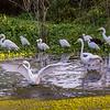 Peaceful Waters Sanctuary, Wellington, Flrodia