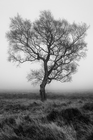 The Lone Tree Phenomenon - Peak District National Park