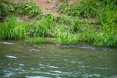 Kettle Creek 2019