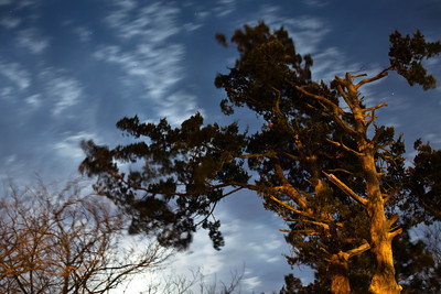 8 second exposure - fabulous tree detail.  I love the Canon 5D Mark II!