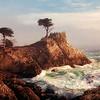 Lone Cypress Mist