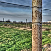 Fence Post - HDR - Eberly Ranch, Chappell Hill, TX