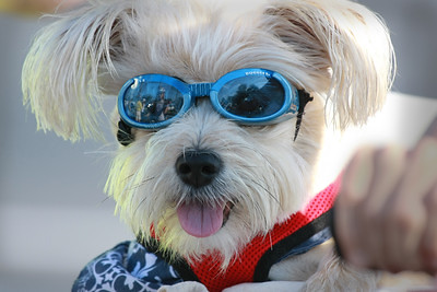 Pedal & Run for Pups 2015