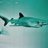 1994 - Bathroom visitors (detail - shark)
