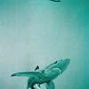 1994 - Bathroom visitors (detail - sharks)