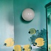 1994 - Bathroom visitors (detail - butterflyfishes)