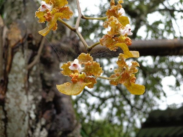 An orchid growing in the wild was a welcome surprise on a walking tour of the Pej Pem farm.