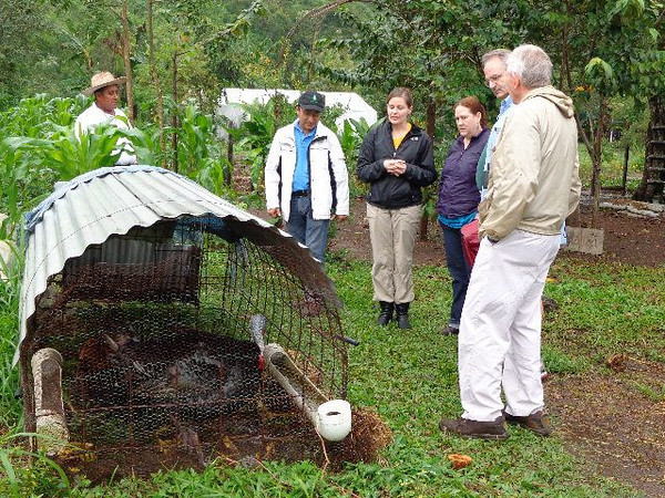 Pej Pem Center serves as a demonstration farm for subsistence farmers living near Palenque. Here, farmers can see how a shelter for turkeys keeps them safe from predators. Maize, a staple food of the Ch'ol people, surrounds the enclosure.