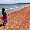 Pelagic Red Crabs on Del Monte Beach