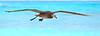 Albatross_BF flying TAB10MK4-11233
