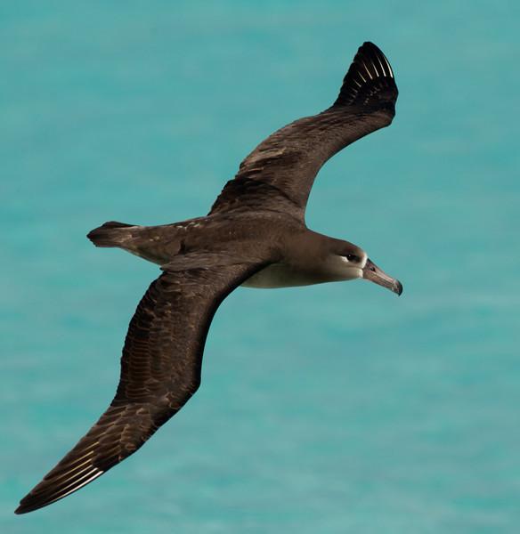 Albatross_BF flying TAB10MK4-6747