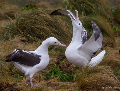 New Zealand and Subantarctic Pelagic