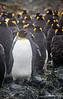 Penguin_King TAB12MK4-48201-Edit