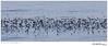 Storm-Petrel raft TAB10MK4-30458-2