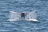 Whale_Gray TAB11MK4-6193