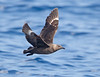 Skua_South Polar TAB11MK4-19622