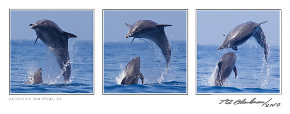 Dolphins 3 jumping