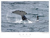 Orca TAB07N_05452