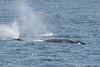 Whale_Gray TAB11MK4-6223