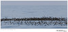 Storm-Petrel raft TAB10MK4-30453-2