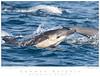 Dophin_Common TAB10MK3-01149