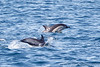 Dolphin_Common TAB11MK4-6066