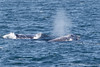 Whale_Gray TAB11MK4-6183