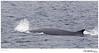 Whale_Fin TAB10MK4-31219-2