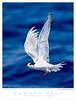 Tern_Common TAB08MK3-10811