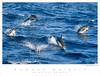 Dolphin_Common TAB08MK3-13541