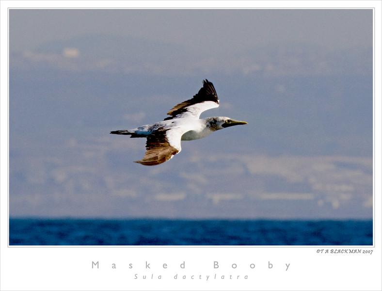 Los Coronados Islands, Mexico<br /> 12.04.2007