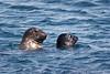 Seal_Harbor TAB11MK4-6403