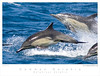 Dolphin_Common TAB08MK3-03861
