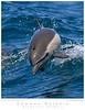 Dolphin_Common TAB09MK3-12899