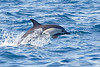 Dolphin_Common TAB11MK4-6073