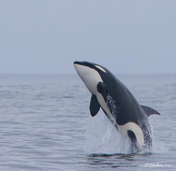 Orca TAB131DX-28141-Edit-2