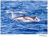 Dolphin_Common TAB10MK4-31748
